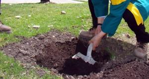abriendo-hoyos-para-plantar-arboles-300x160